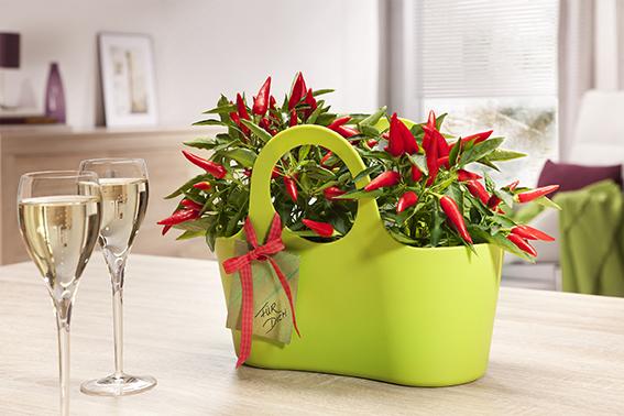 Scheurich Plantbag Valentinstag