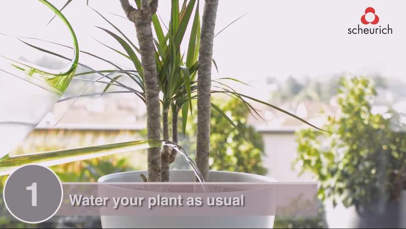 Bördy pour the plant
