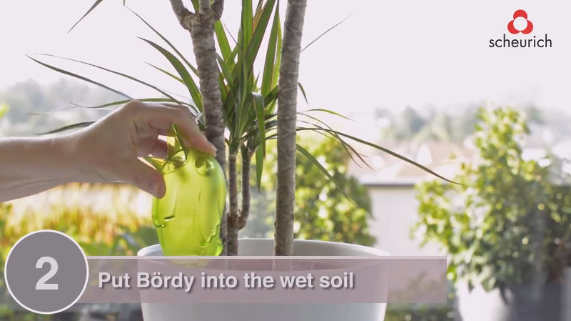 Bördy planted into soil