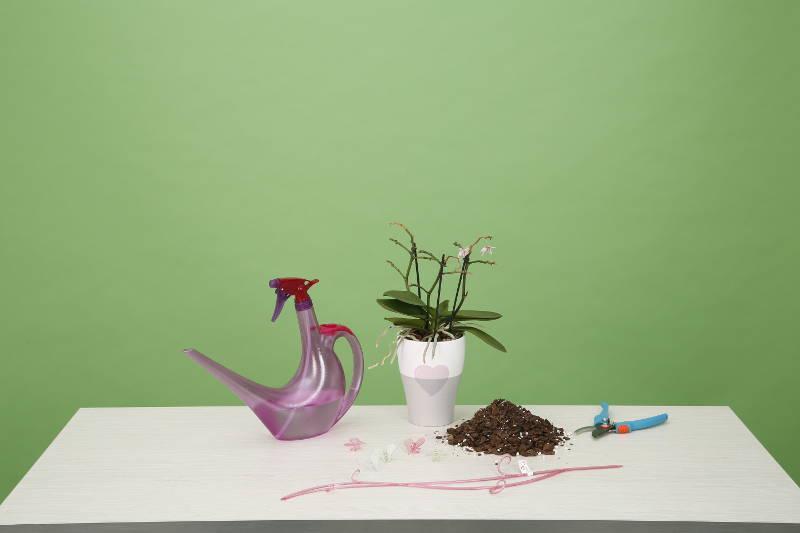 Orchideenplege Werkzeuge