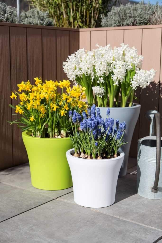 hyacinths-daffodils-and-grape-hyacinths-in-No1Style-planters