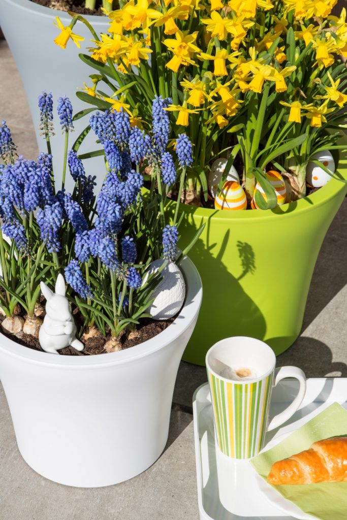 daffodil-and-grape-hyacinth-in-No1Style-planter