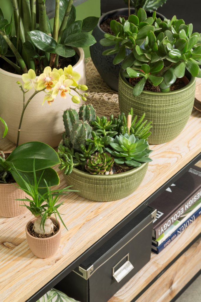 Shelf shelfie close-up with Corteza plant bowl and cover-pots with succulents and cacti