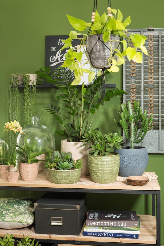 Regal Shelfie mit Corteza Blumentöpfen und Schale, mit Intense und Pure Pottery Übertöpfen und Sukkulenten