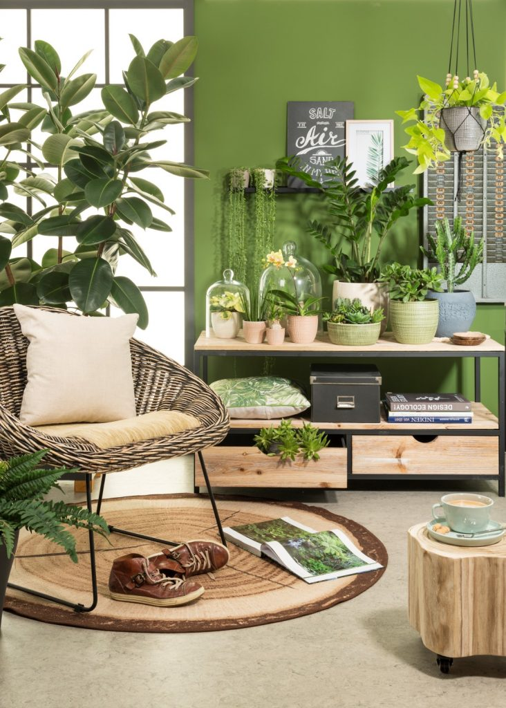 urban jungle living room with wicker chair, tree-slice look carpet, succulents, cacti, rubber tree, houseplants, macrame