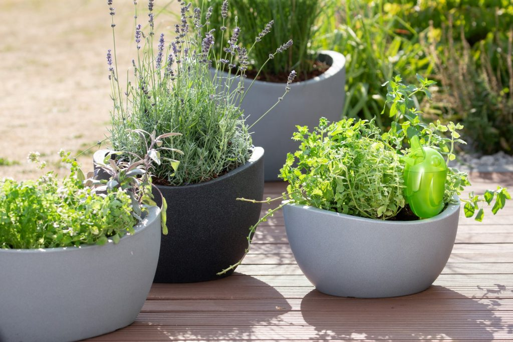 Scheurich planters Wave Globe Bowl and Wave Globe Jardiniere planted with culinary herbs