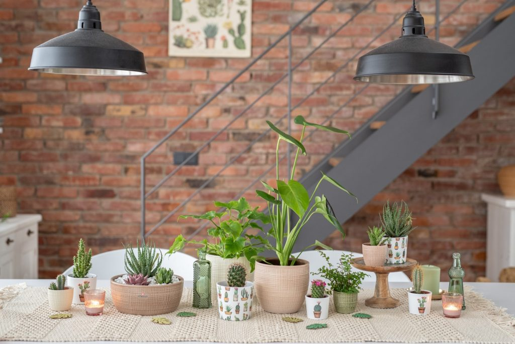 Cactus decoration on dining table